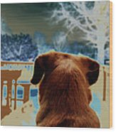 From Her Perspective   Wood Print by Steven Digman