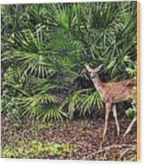 From The Palmetto Bushes Wood Print by Jan Amiss Photography