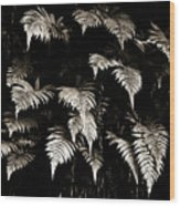 Fronds Wood Print
