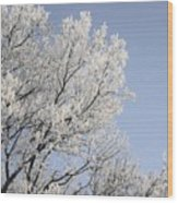 Frost Cover Maple Trees Wood Print