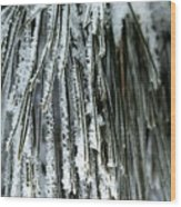 Frost Covered Pine Needles IIi Wood Print