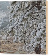 Frost-covered Pine Wood Print