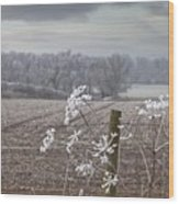 Frost-covered Rural Field Cumbria Wood Print by John Short