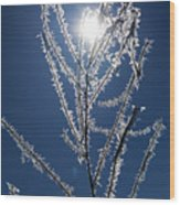 Frost Ice Crystals Wood Print