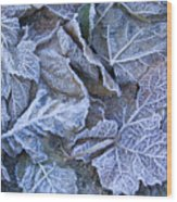 Frost Wood Print