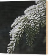 Frost On Pine Wood Print