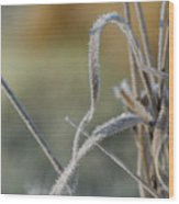 Frost On The Stems Wood Print