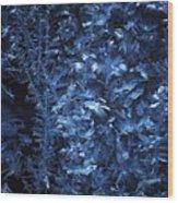 Frost On Window Wood Print