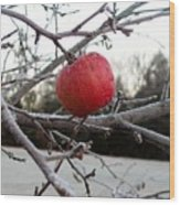Frosted Apple Wood Print