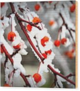 Frosted Berries Wood Print