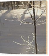 Frosted Branches Wood Print