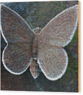 Frosted Butterfly Wood Print by Kathy DesJardins