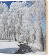 Frosted Cottonwoods Wood Print