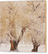 Frosted Golden Trees Wood Print