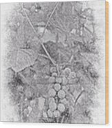 Frosted Grapes Vignette Wood Print