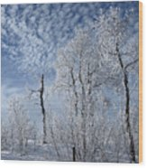 Frosted Hilltop Quakies Wood Print