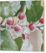Frosted Holly Wood Print
