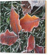 Frosted Leaves Wood Print