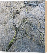Frosted Limbs Wood Print