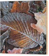 Frosted Painted Leaves Wood Print