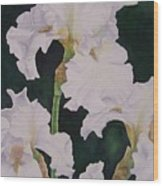 Frosted Pearl Iris Wood Print