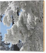 Frosted Pine Needles Wood Print