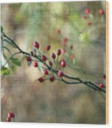 Frosted Red Berries And Green Leaves  Wood Print