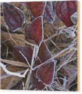 Frosted Red Green Briar Wood Print
