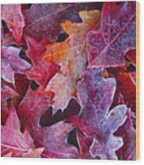 Frosted Red Oak Leaves Wood Print