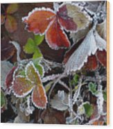 Frosted Strawberries Wood Print