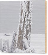 Frosted Tree Root Wood Print