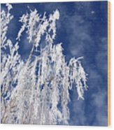 Frosted Weeping Willow Wood Print