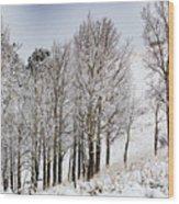 Frosty Aspen Trees Wood Print