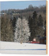 Frosty Birch Wood Print
