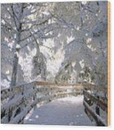 Frosty Boardwalk Wood Print