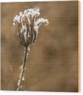 Frosty Flower Remains Wood Print