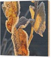 Frosty Fringe Wood Print