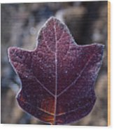 Frosty Lighted Leaf Wood Print