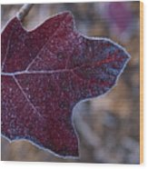 Frosty Maroon Leaf Wood Print
