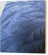Frosty Palm Tree Fronds On Car Trunk Wood Print