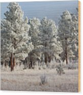 Frosty Pikes National Forest Wood Print