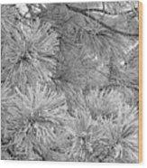 Frosty Pine Tree Wood Print