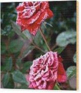 Frosty Rose Wood Print