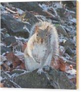 Frosty Squirrel Wood Print