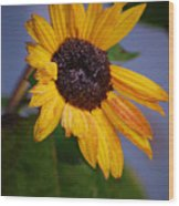 Frosty Sunflower Wood Print