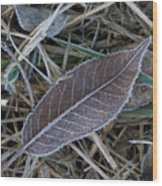 Frosty Veined Leaf Wood Print