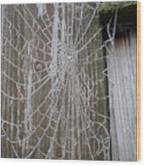 Frosty Web Wood Print