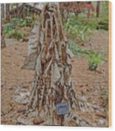 Frozen Banana Tree In Colored Pencil Wood Print