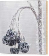 Frozen Berries Wood Print