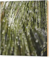 Frozen Drops Wood Print